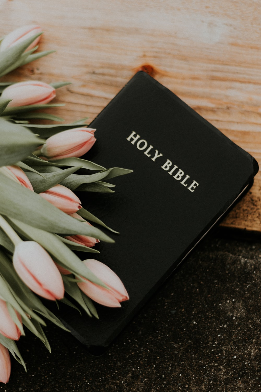 Holy Bible under pink tulips