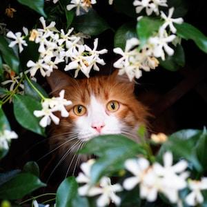 brown cat near white petaled flowers