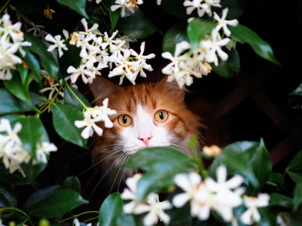 brown cat near white petaled flowers