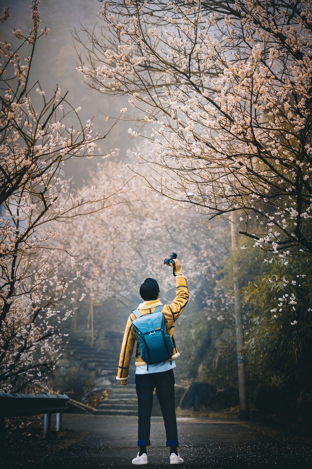 man wearing yellow hoodie taking picture of cherry blossom tree