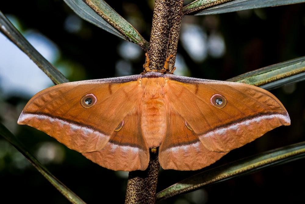 brown moth perching on plant leaf stalk