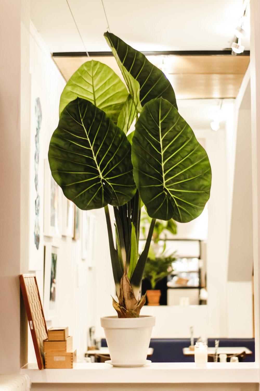 shallow focus photo of green indoor plants