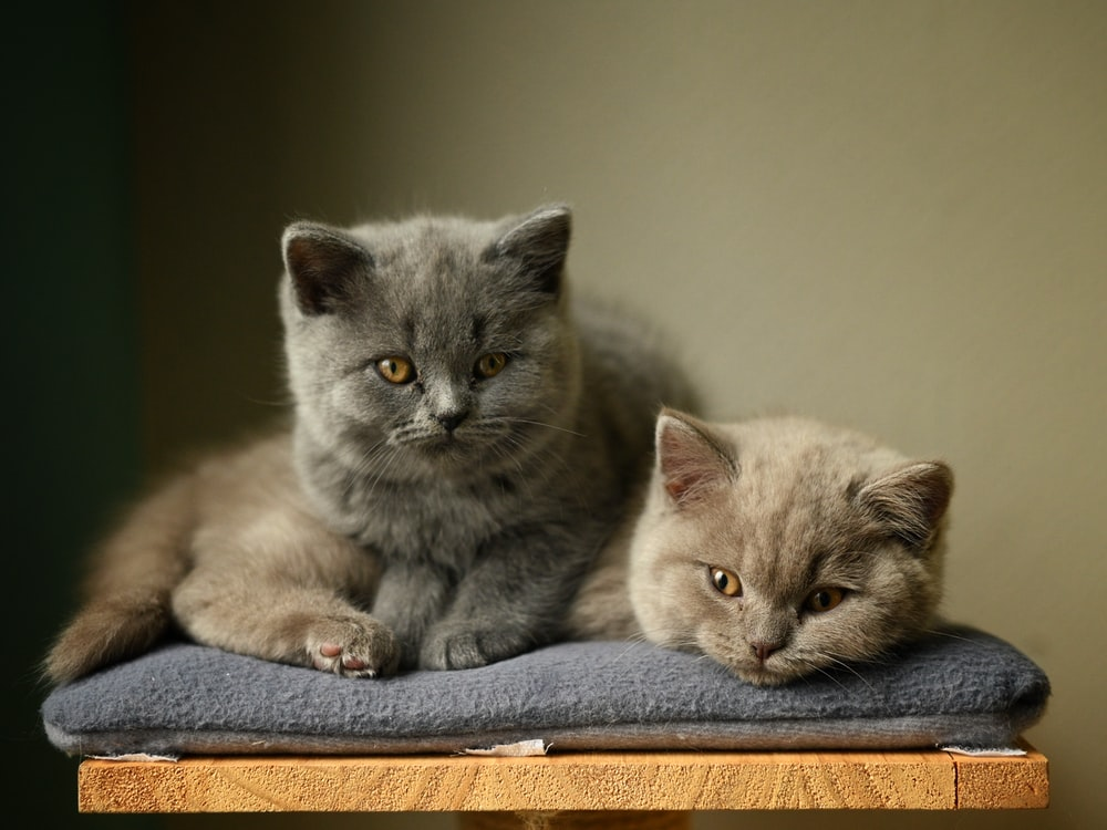 two cats on gray petbed