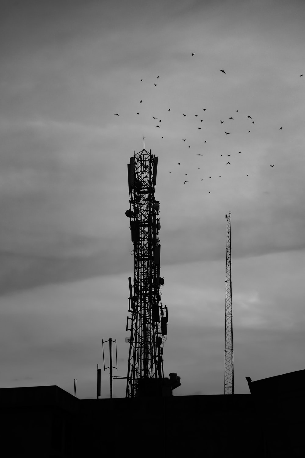grayscale photography of flock of birds flying over the crane tower