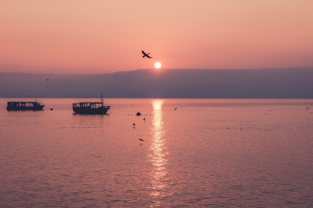 flying bird on boat