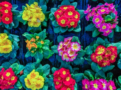 assorted color petaled flowers blossom teams background