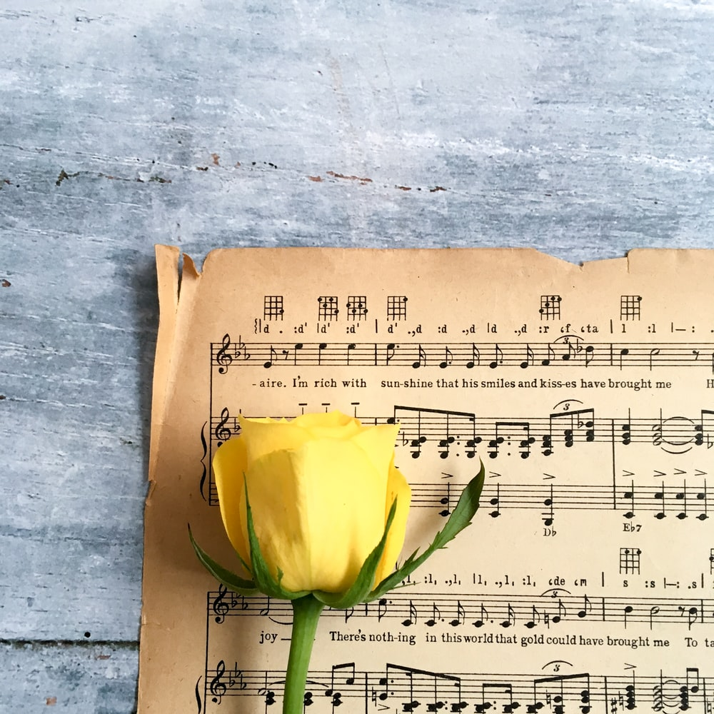 yellow rose on musical note sheet