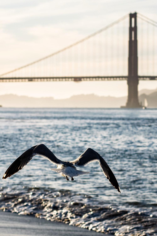 seagull flying over beach near bridge