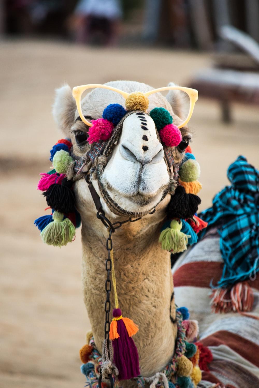 camel with head decor