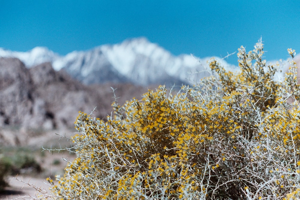 selective focus photography of yellow-leafed plant near rocky mountain during daytime