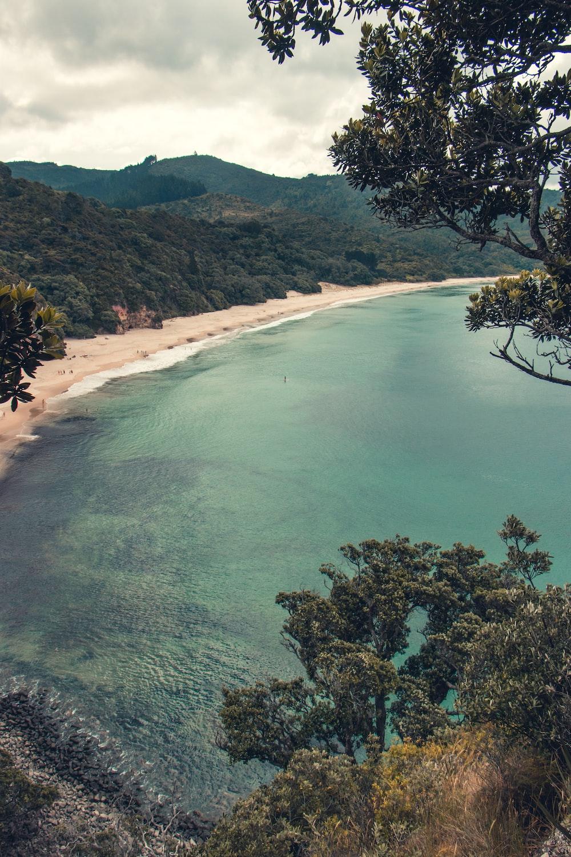 tree lined beige sand beach