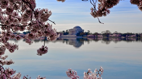 One Perfect Day in DC