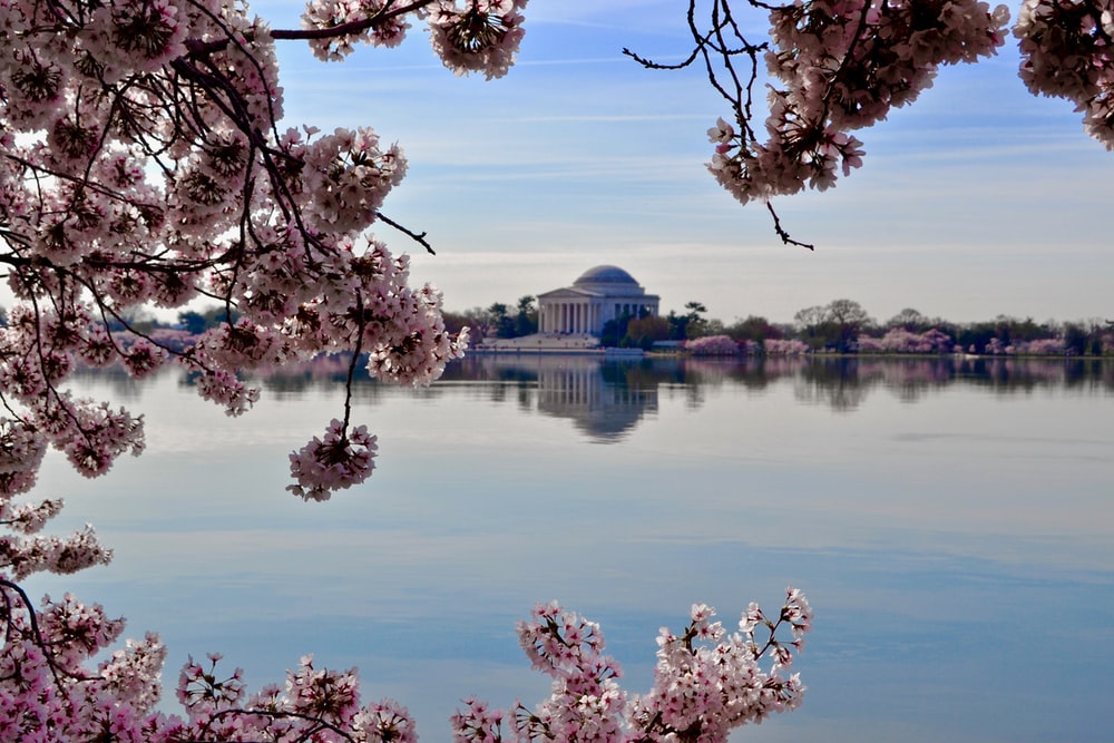 pink-white flowers beside body of water overlooking white dome building during daytime