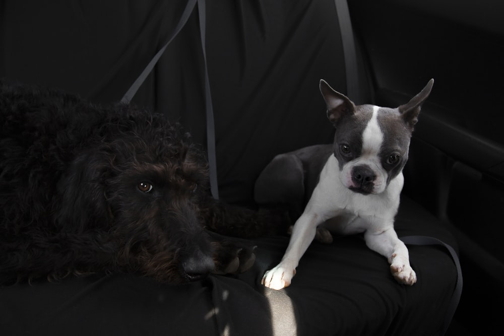 two brown, black, and white dogs