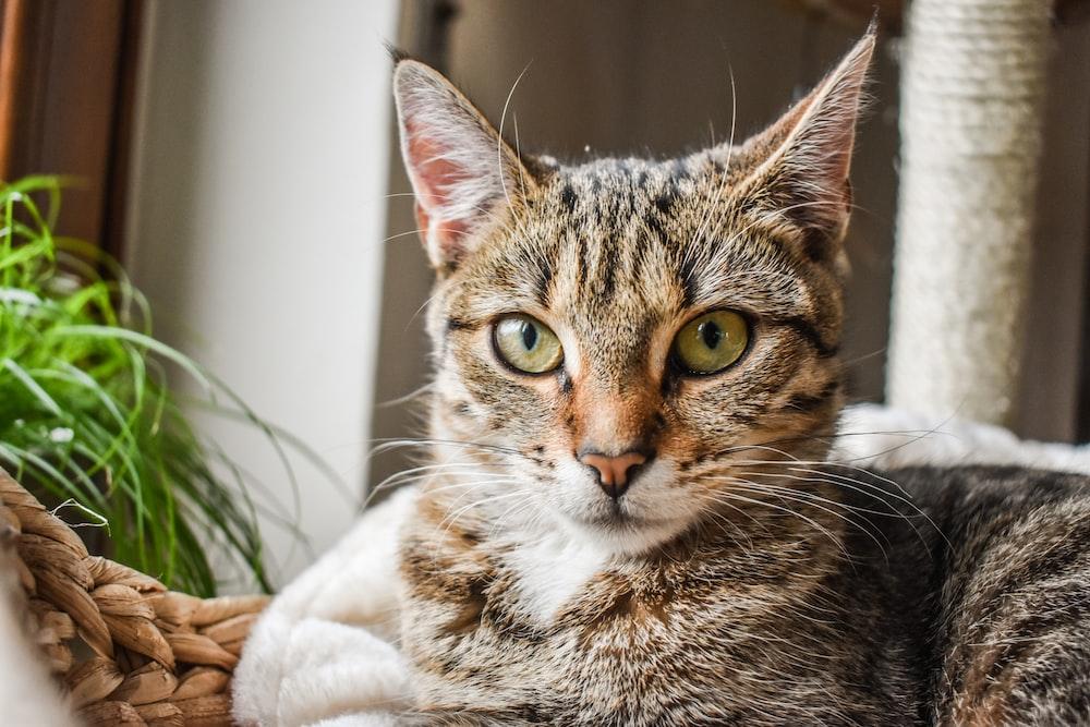 brown tabby cat reclining near plant