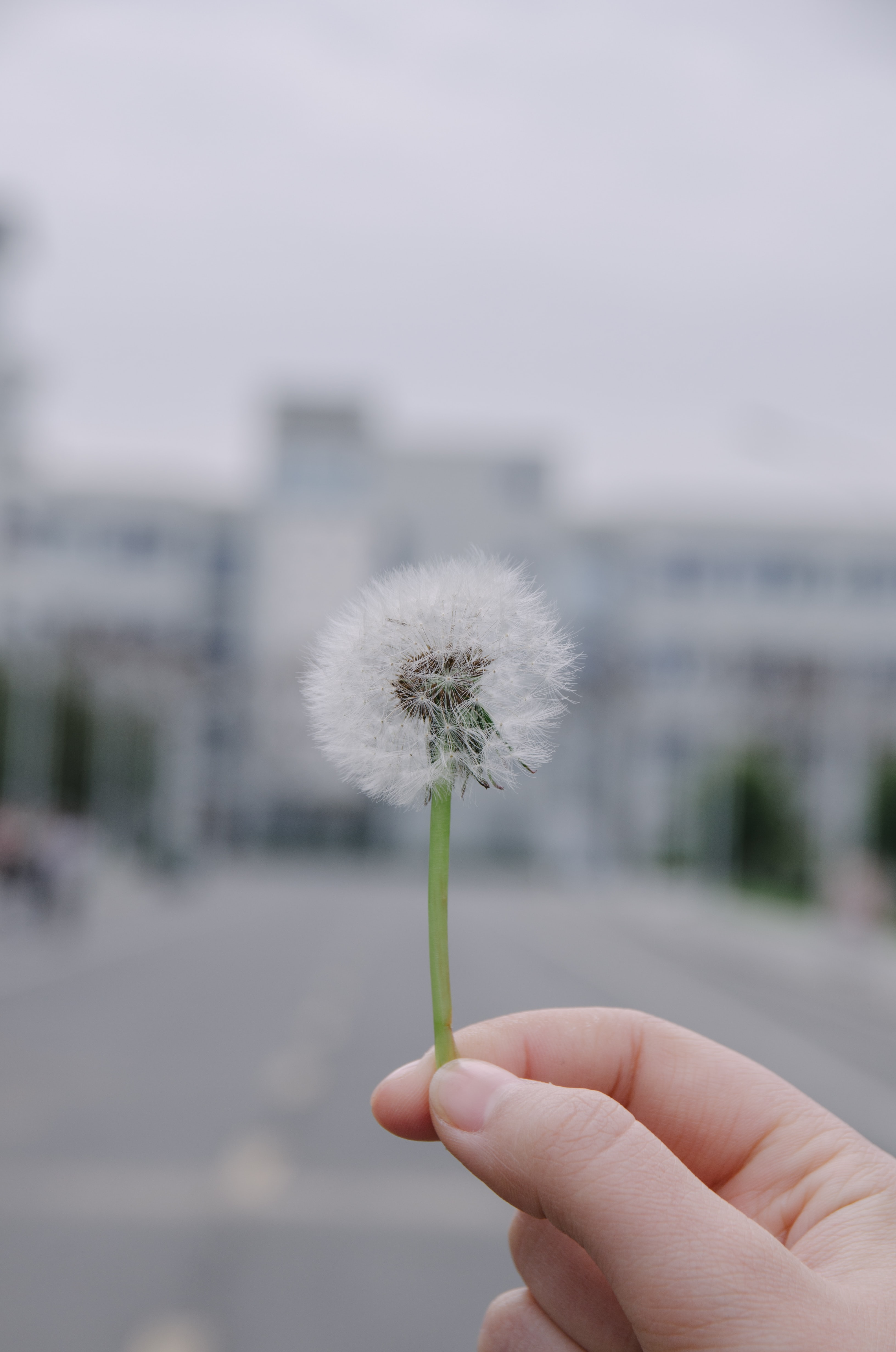 selective focus photography of person holding dandelion