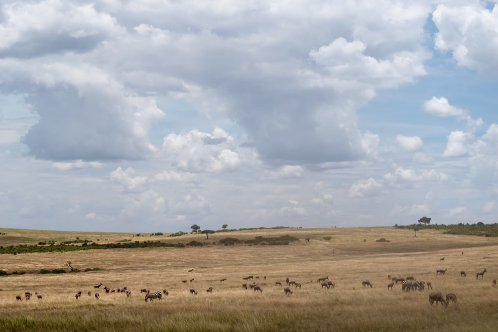 animals scattered on open field