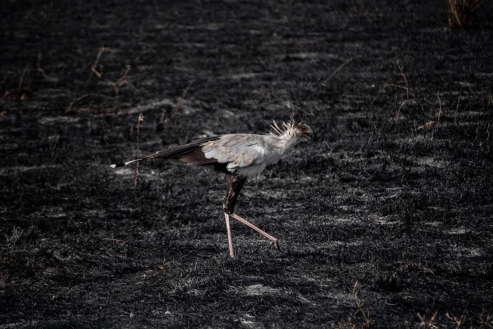 bird walking on grass