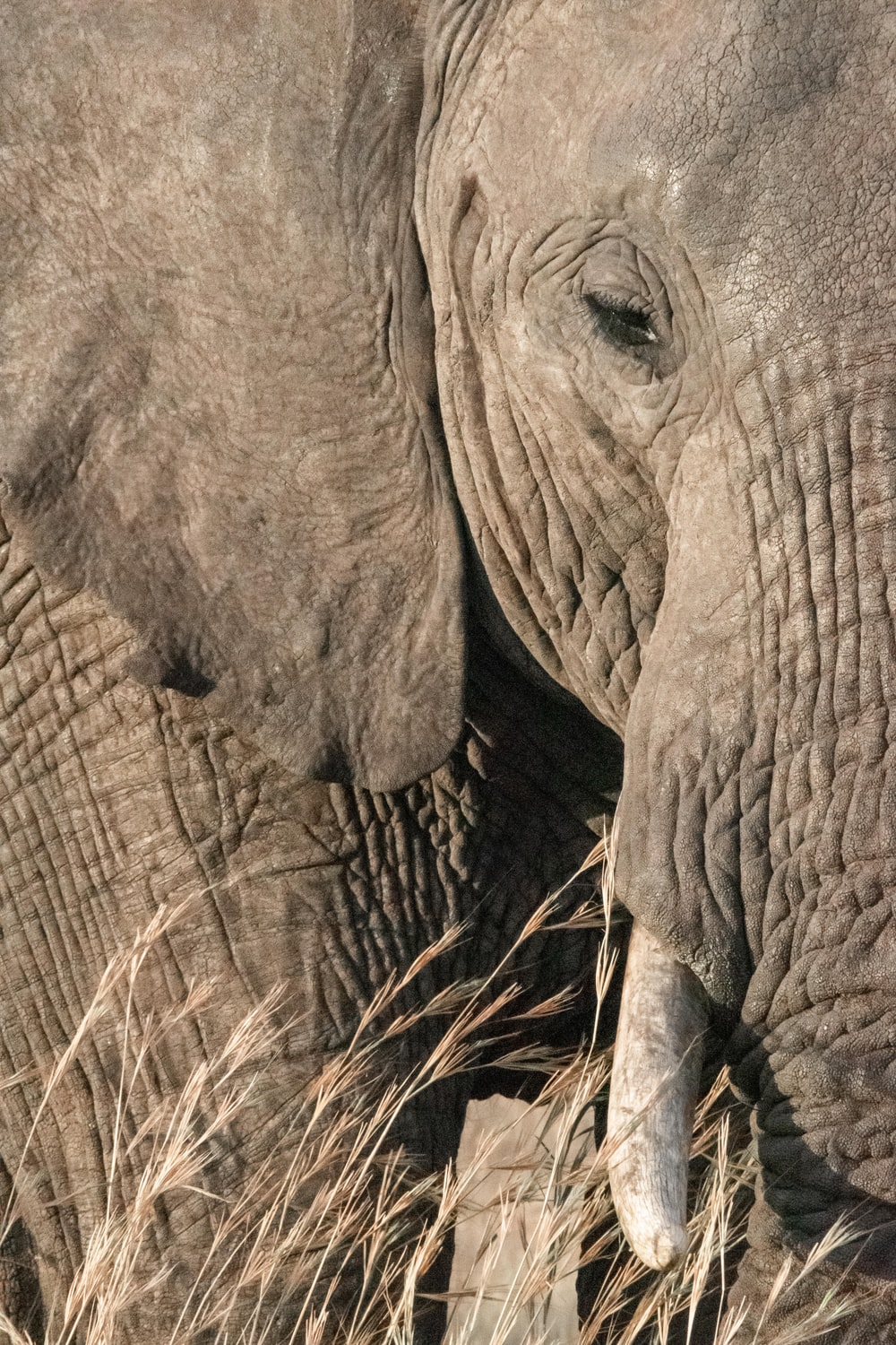close-up photography of elephant's face
