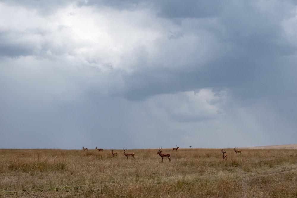 animals on grass field ]