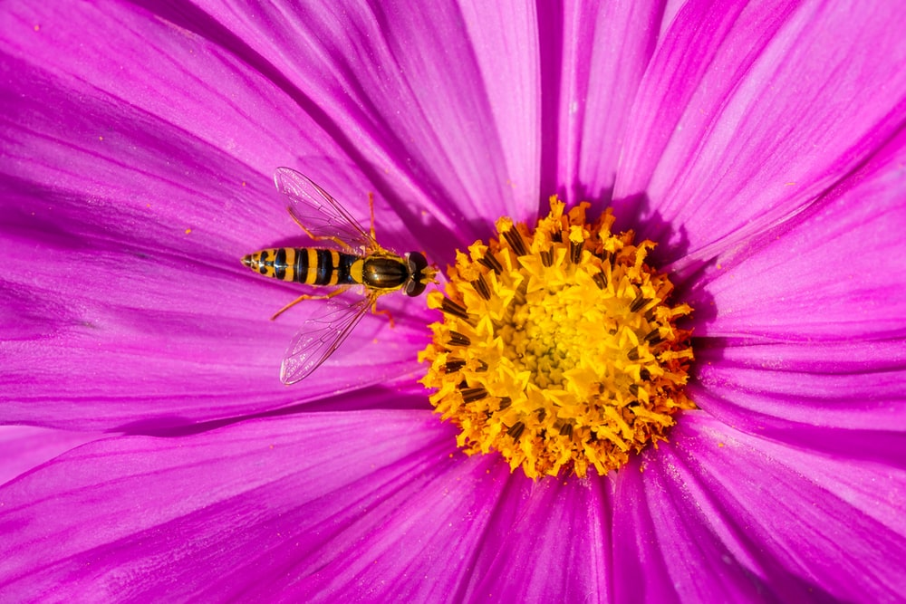 bee on yellow and purple petaled flower