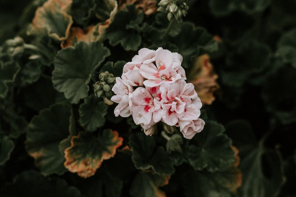 white petaled flower bloom during daytime