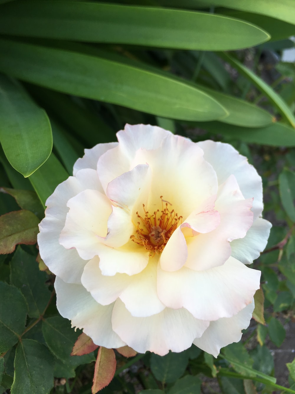 1 white petaled flower