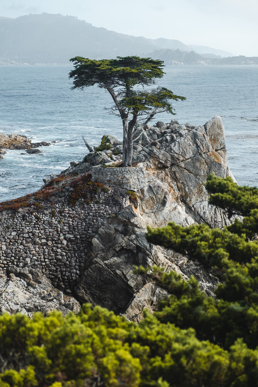 green tree on top of sea cliff during daytime