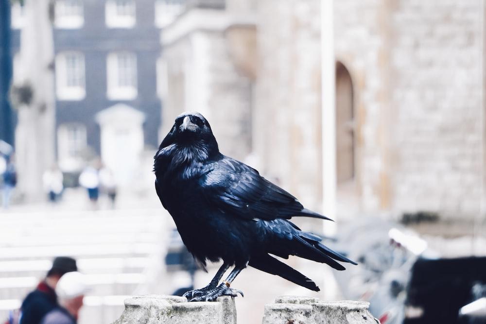 black bird on brown pavementt