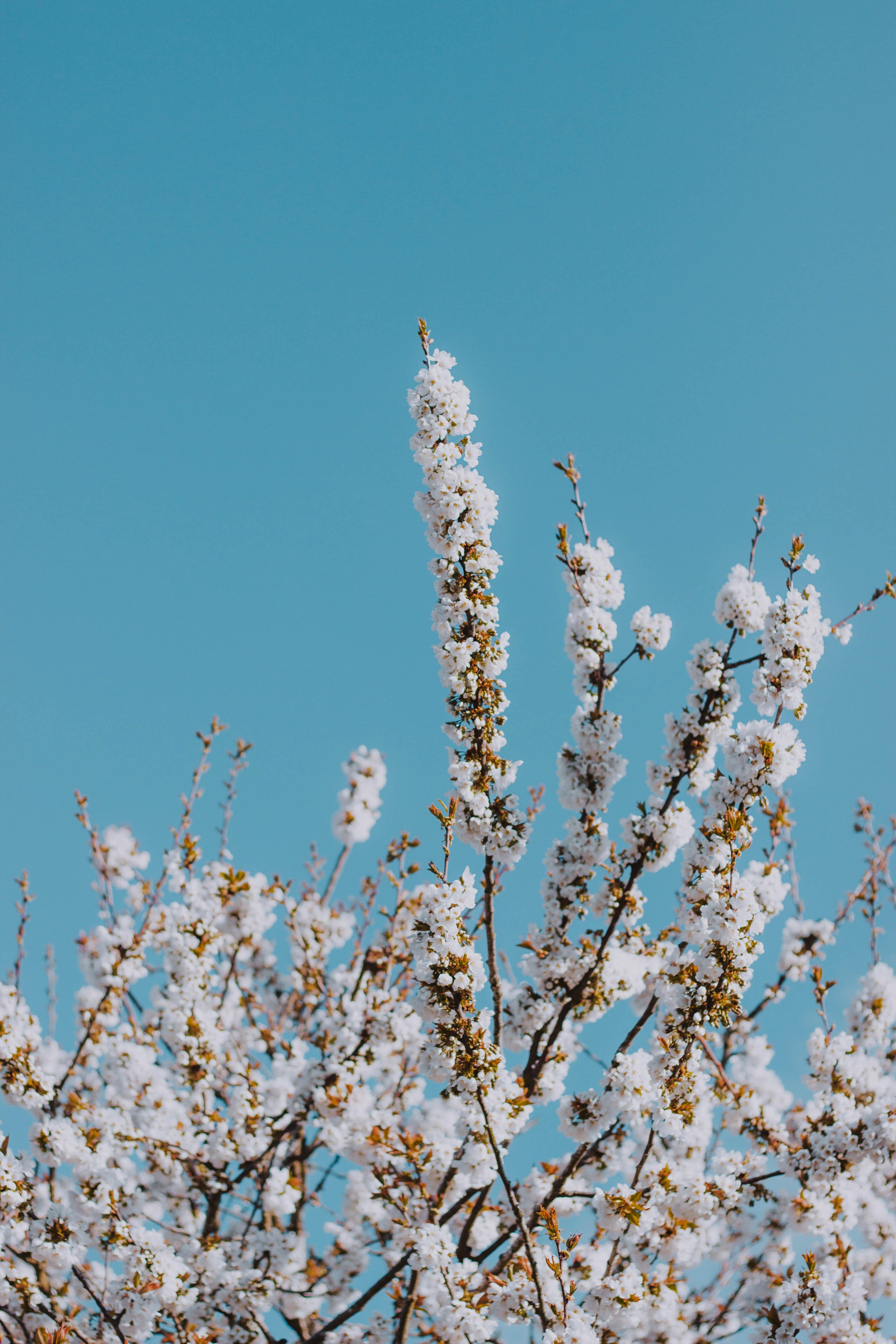 white flowering tree