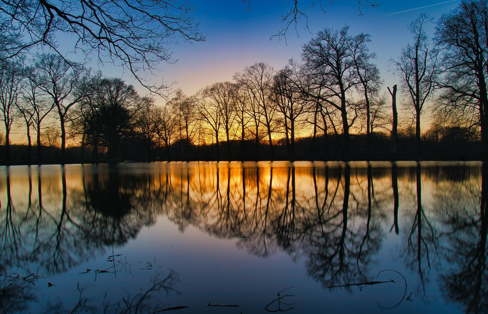 silhouette of trees reflected on calm water during golden hour