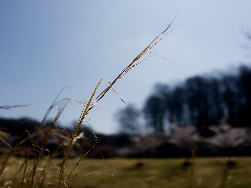 green grass in close-up photo