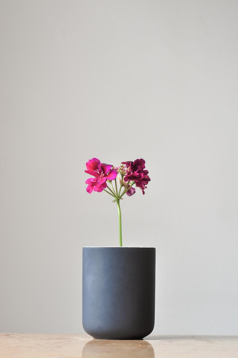 purple-petaled flower in gray vase