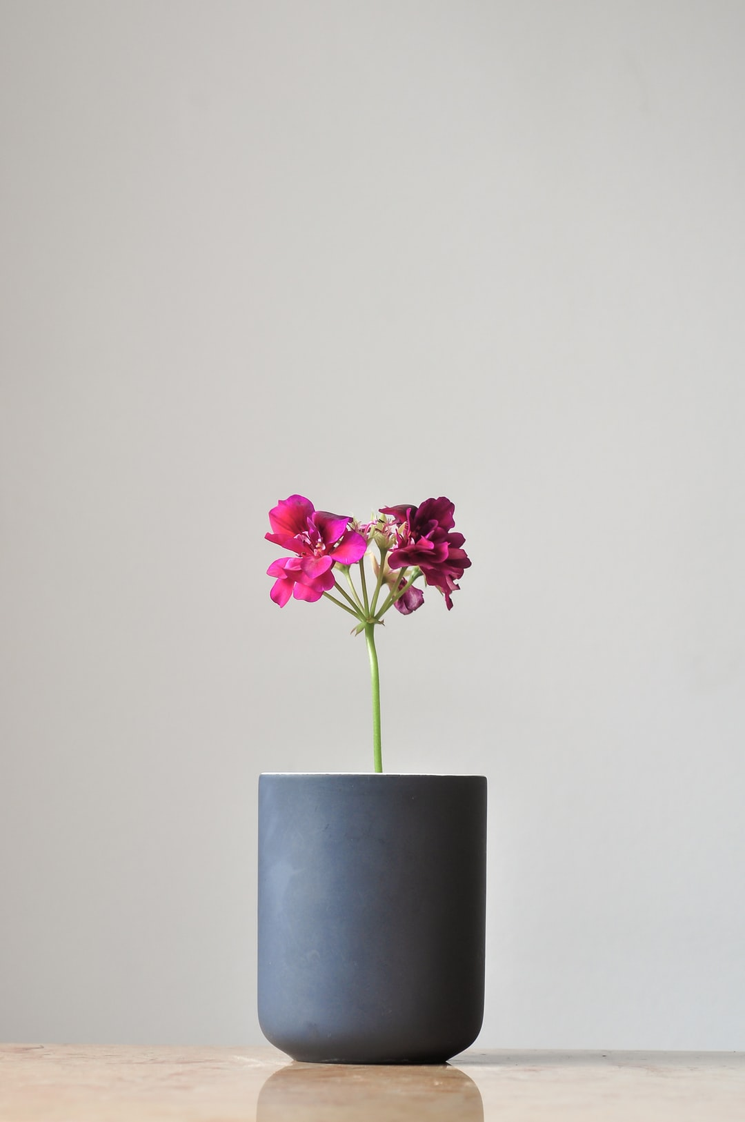 A pretentious attempt of a minimal ikebana in a toothbrush pot.