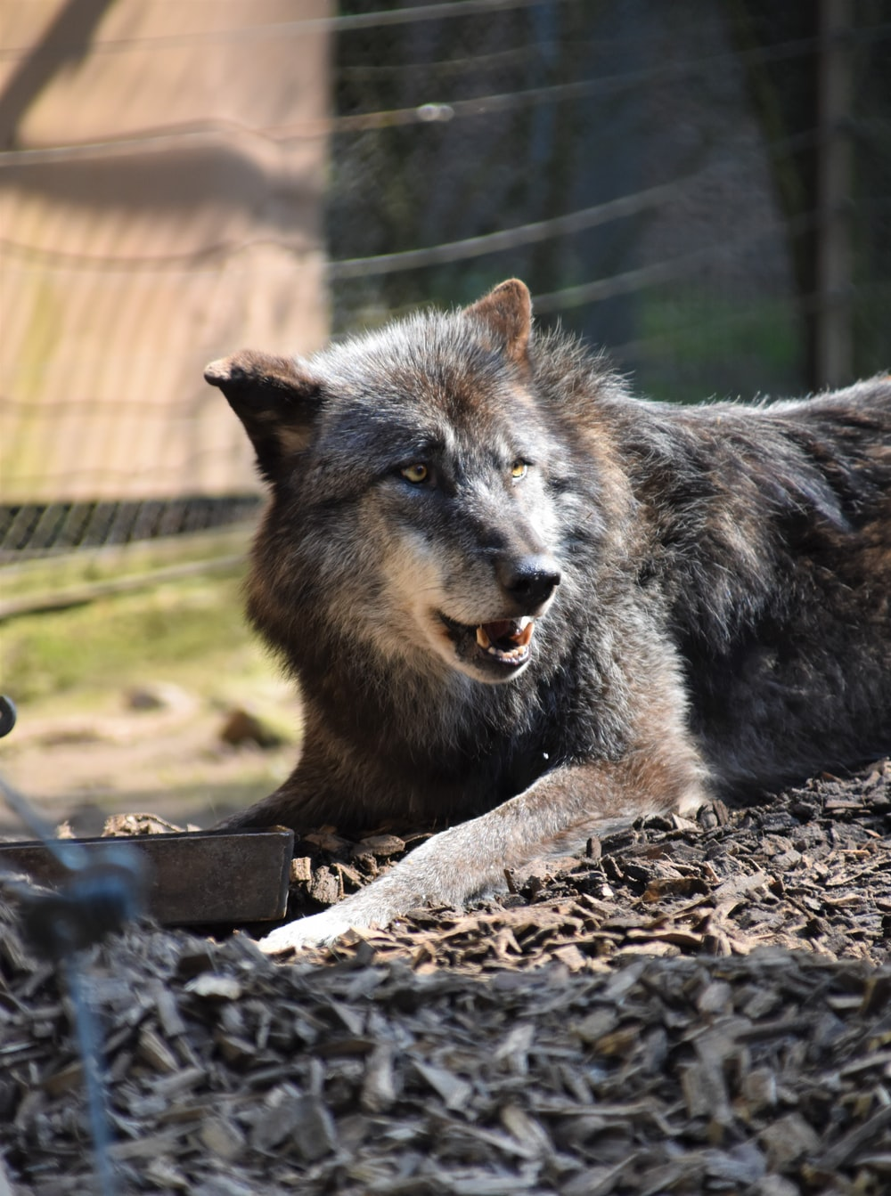 macro photography of gray wolf on gray surface