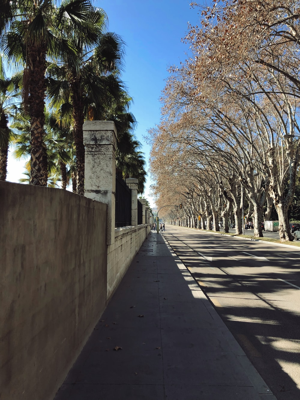 concrete highway near trees