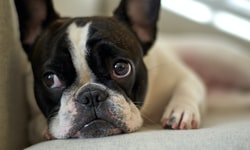 Dip Your Pup's Pads Into These 5 Dog Paw Cleaners