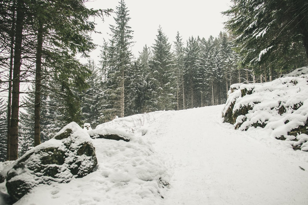 snowfield near pine trees at daytime