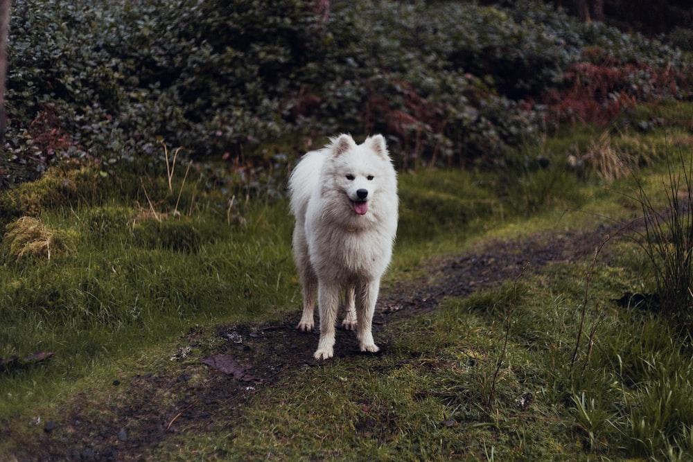 white dog near plants