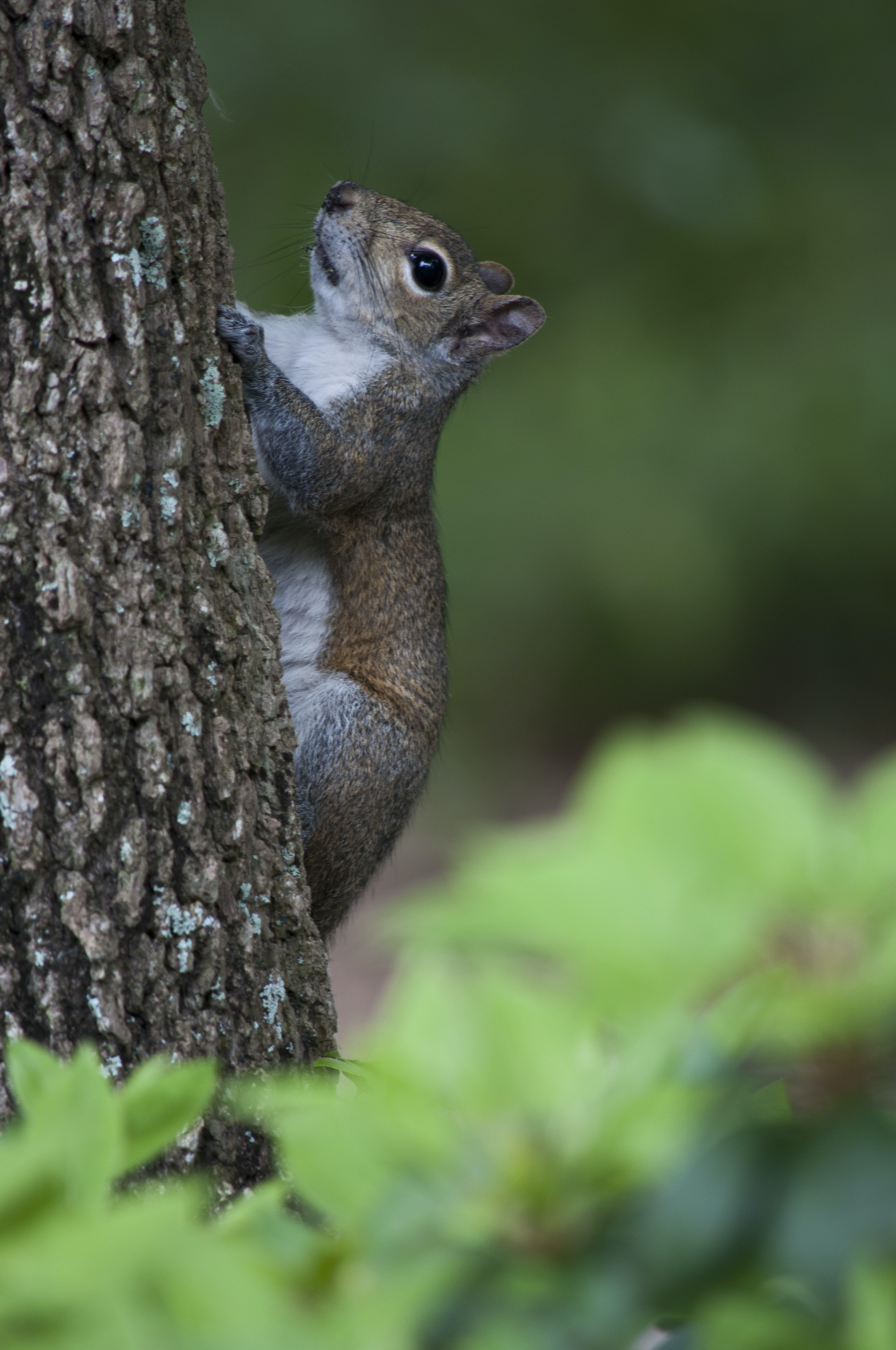 squirrel climbing on tree in selective focus photography