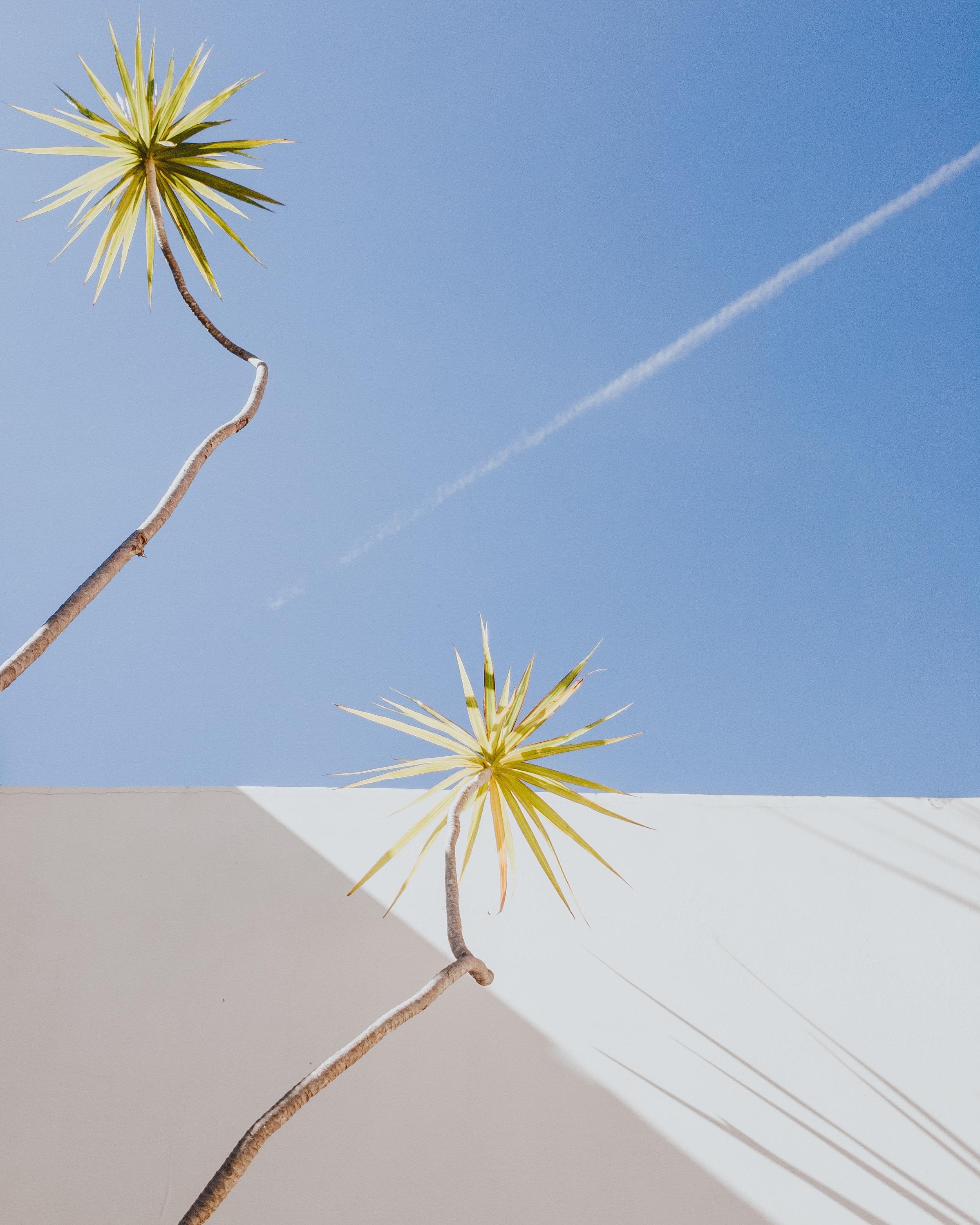 green plants near white wall