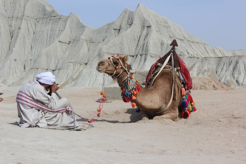 man sitting on road in front camel during daylight