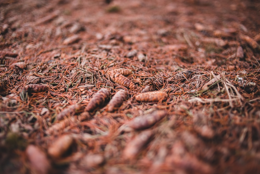 selective focus photography of dry grass