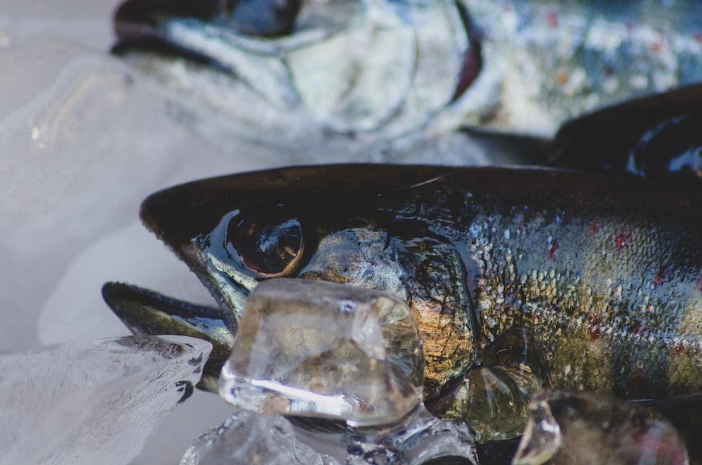 photo of yellow and black fish
