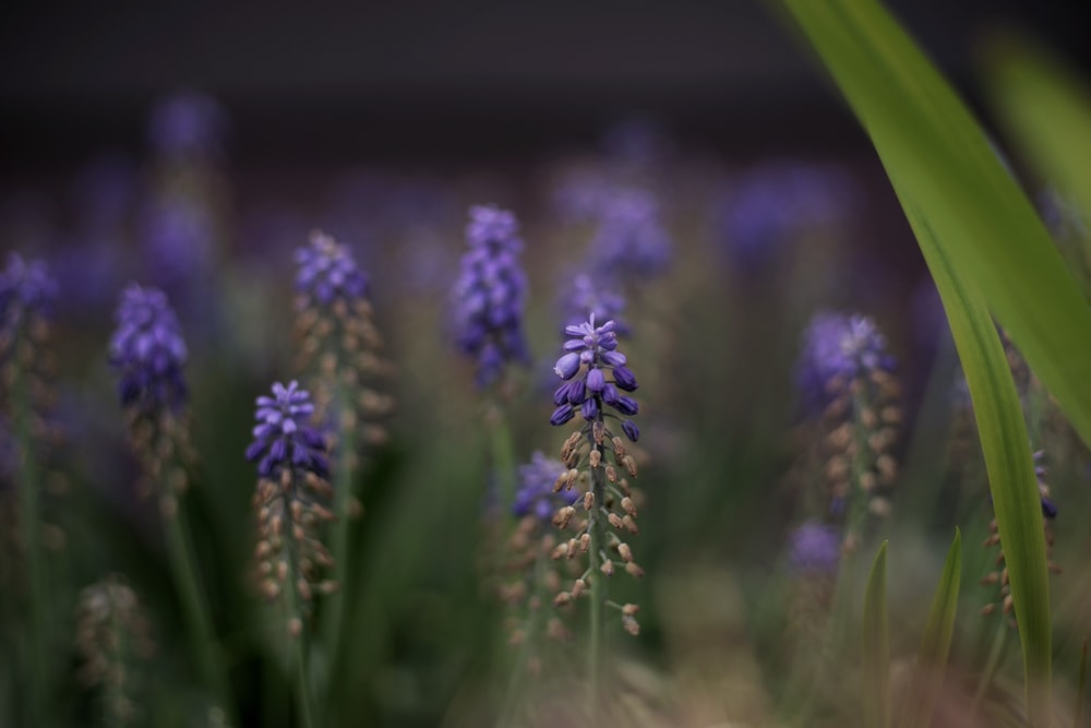 selective focus photography of purple-petaled flower