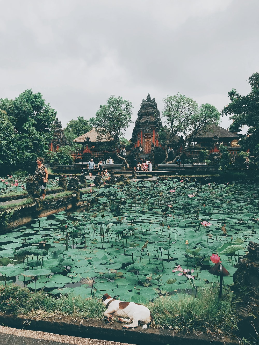 water lily pads on body of water