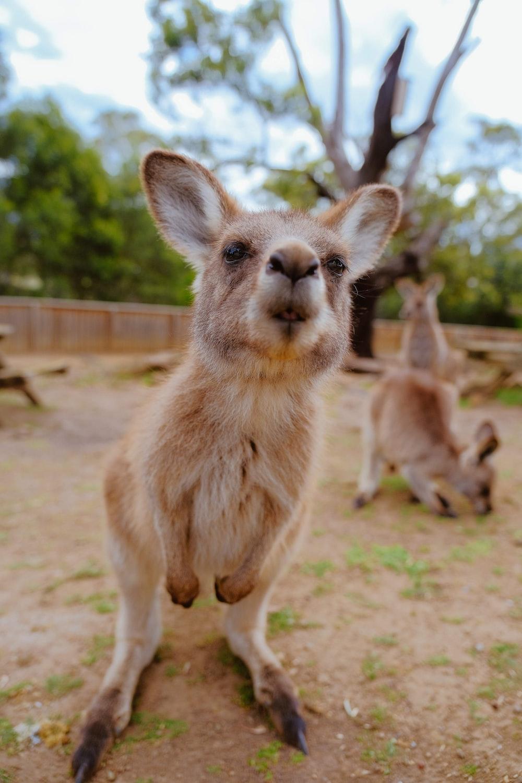 photo of beige coated animal