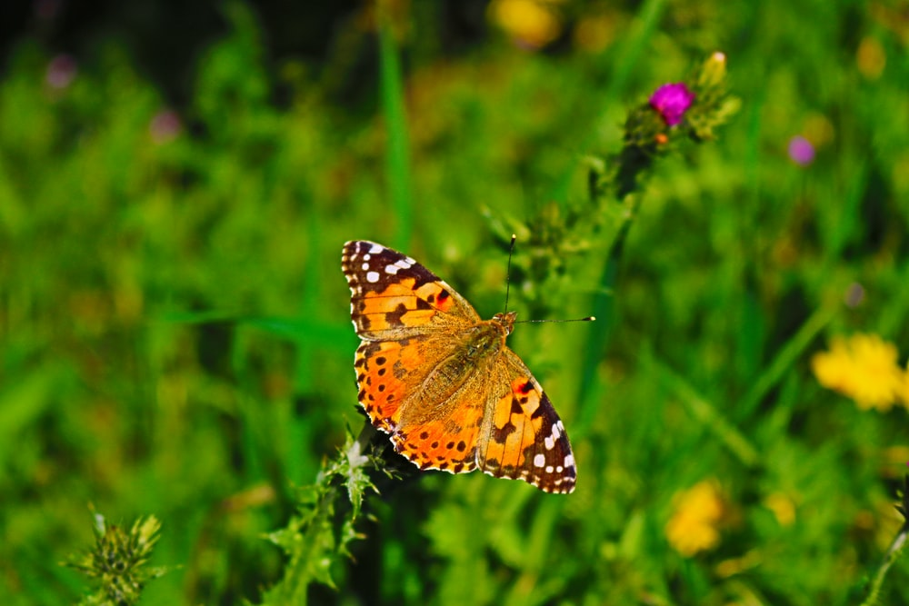 orange butterfly photography