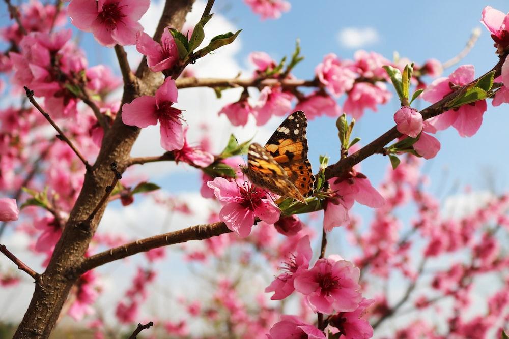 brown butterfly on flowering tree