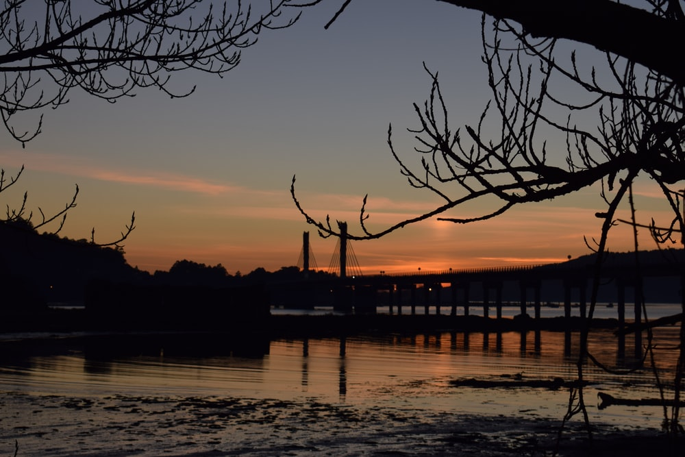 silhouette of bridge and withered trees